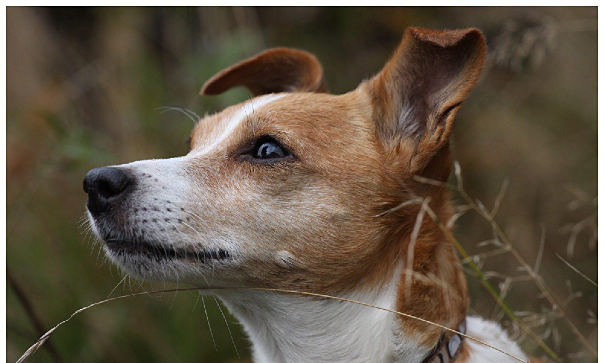 Hundeschule Blickwechsel